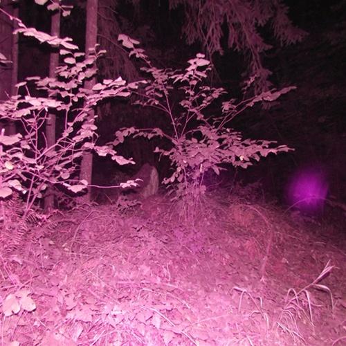 electronic voice phenomena evp paranormal investigations camera